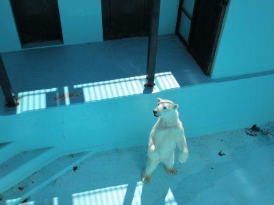 帯広動物園塗装奉仕を行います!